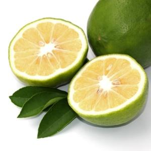 des citrons sans ogm