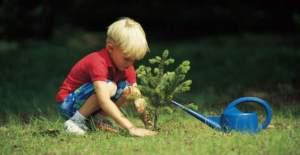 piantare_alberi_nuovi_nati