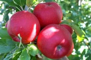 mela e vita