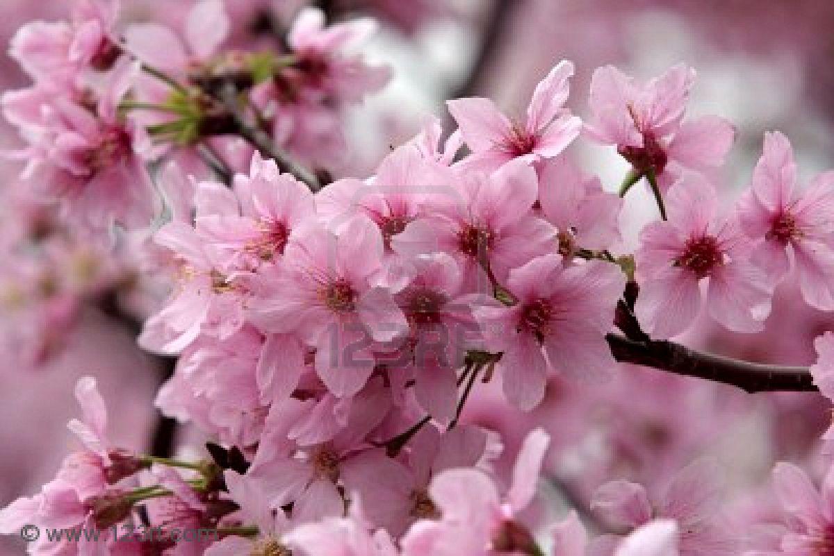 I fiori che modellano la tua silhouette la for Immagini desktop primavera