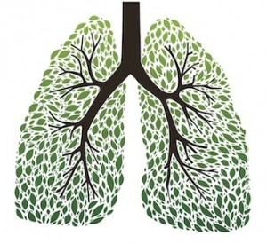 herbs-for-healthy-lungs-300x275