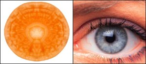 Carrots-eyes