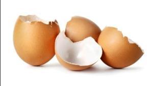 gusci-uovo