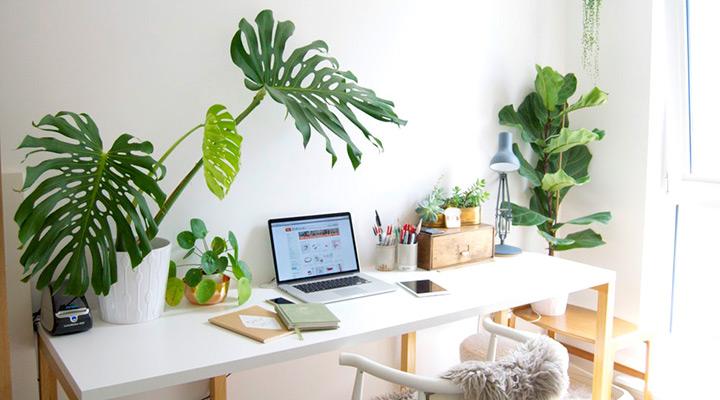 10 piante da ufficio che migliorano l aria e l umore 10 for Idee per arredare un ufficio