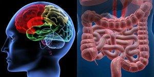 intestino_secondo_cervello