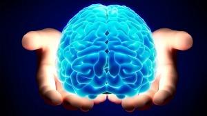 cervello-1