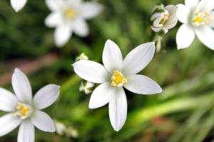 fiore-di-bach
