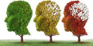 stagioni_cervello