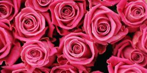 landscape-1455995144-rosa