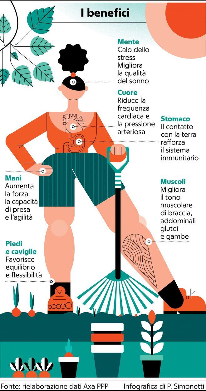 Acero Radici Invasive https://casabenessere.wordpress/2020/06/03/la-vitamina